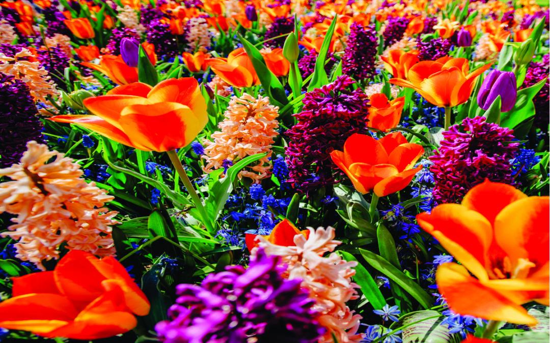 Plantas, Olores y Rituales de Primavera